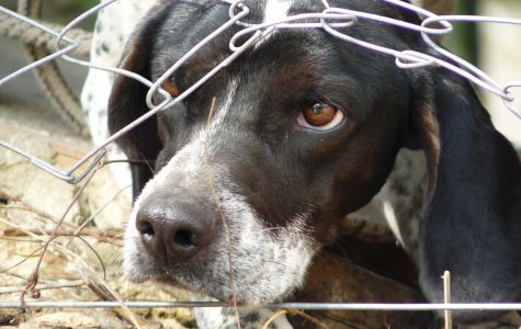"""Maltreatment in animal's """"fear"""" factories"""